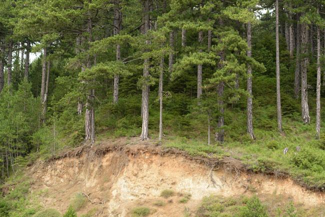 Lézerszkenneres megoldások a talajeróziós mechanizmusok vizsgálatakor